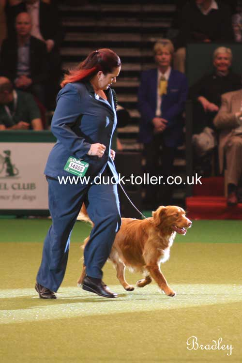 Ari & Sharne in the Big Ring at Crufts
