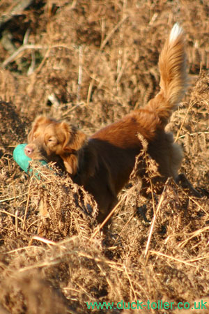 Rupert Gundog training