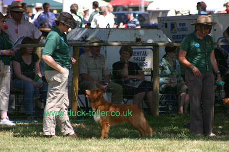 Rupert in the NSDTR Club Display Team at the CLA Game Fair
